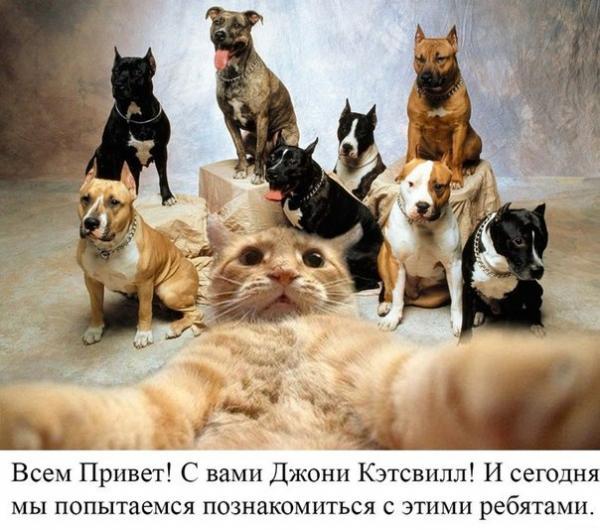 http://www.anekdotov-mnogo.ru/image-prikol/smeshnie_kartinki_138953397197.jpg