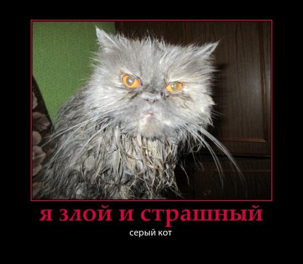 http://www.anekdotov-mnogo.ru/image-prikol/smeshnie_kartinki_138954491238.jpg