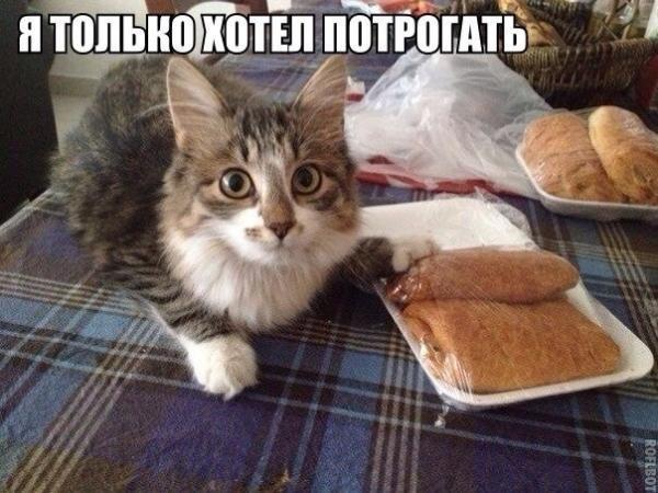 http://www.anekdotov-mnogo.ru/image-prikol/smeshnie_kartinki_138956916491.jpg