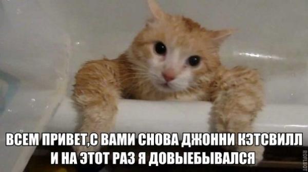 http://www.anekdotov-mnogo.ru/image-prikol/smeshnie_kartinki_138956916515.jpg