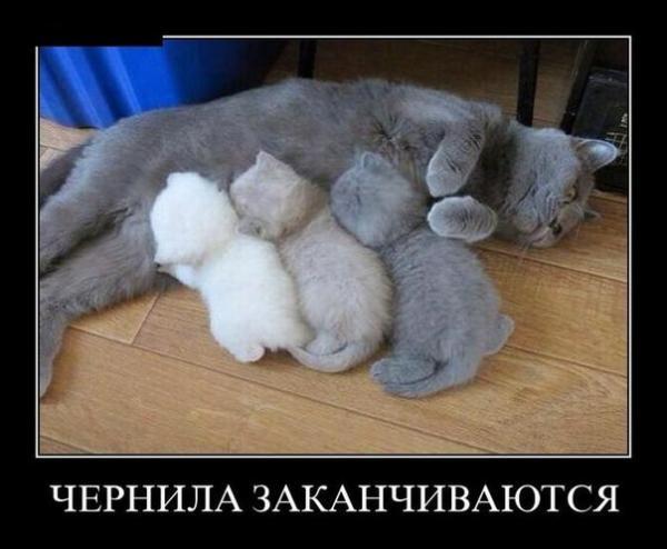 smeshnie_kartinki_138990293524.jpg