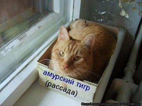 smeshnie_kartinki_13908860856.jpg