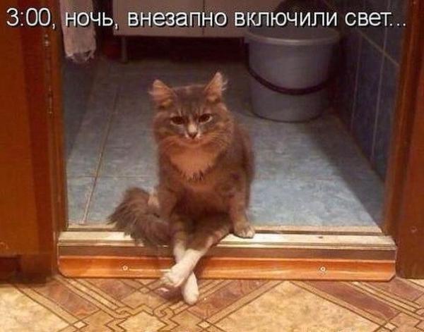 http://www.anekdotov-mnogo.ru/image-prikol/smeshnie_kartinki_139136809045.jpg