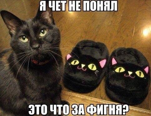 http://www.anekdotov-mnogo.ru/image-prikol/smeshnie_kartinki_139210702245.jpg