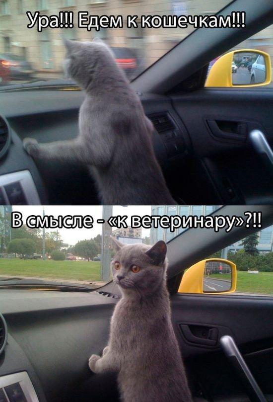 http://www.anekdotov-mnogo.ru/image-prikol/smeshnie_kartinki_139343758368.jpg