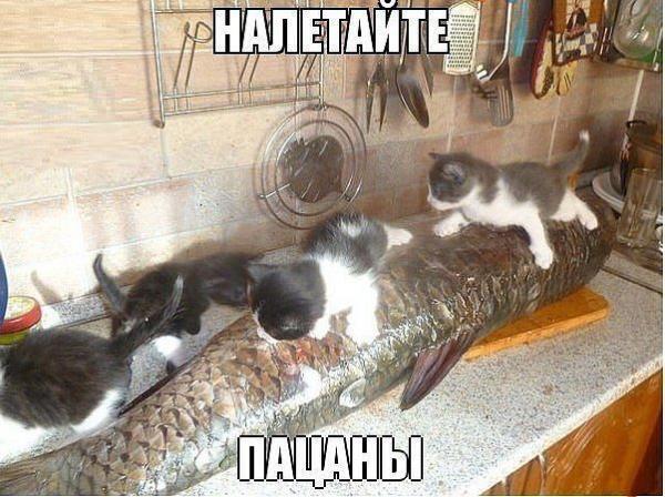http://www.anekdotov-mnogo.ru/image-prikol/smeshnie_kartinki_13949961306.jpg