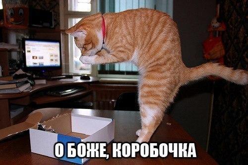 http://www.anekdotov-mnogo.ru/image-prikol/smeshnie_kartinki_13950824768.jpg