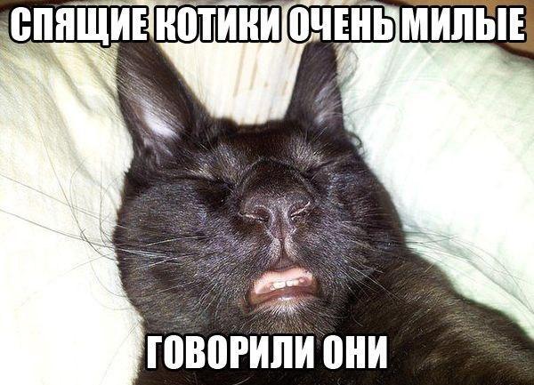 http://www.anekdotov-mnogo.ru/image-prikol/smeshnie_kartinki_139791499070.jpg