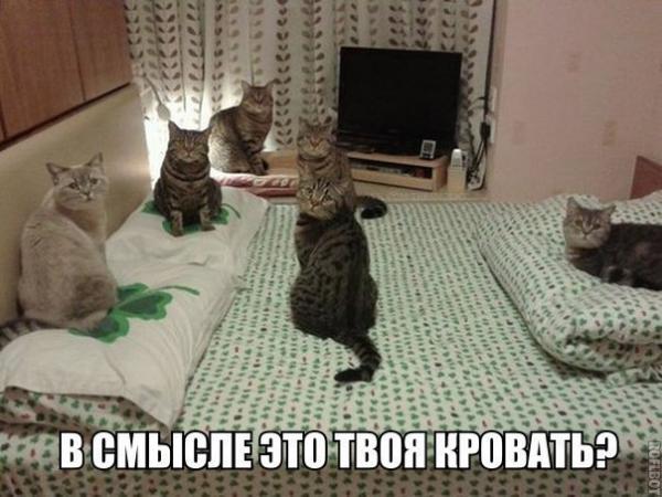 http://www.anekdotov-mnogo.ru/image-prikol/smeshnie_kartinki_13981175473.jpg