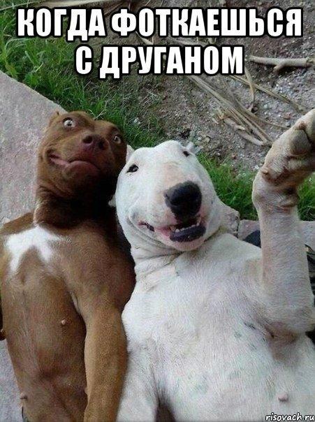 http://www.anekdotov-mnogo.ru/image-prikol/smeshnie_kartinki_140808532318.jpg