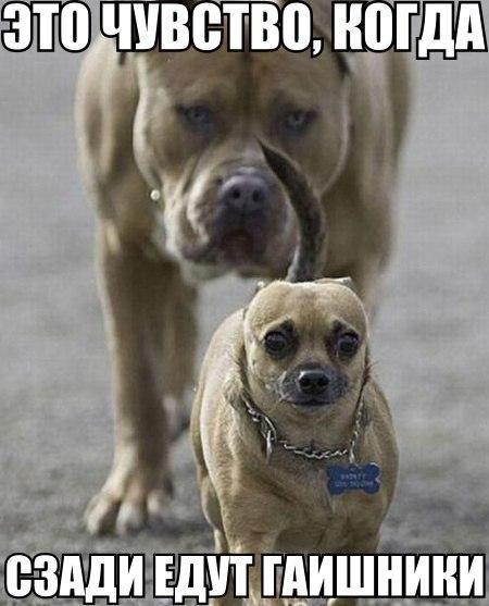 смешные картинки с собаками.