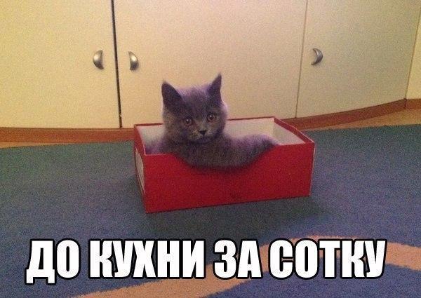 http://www.anekdotov-mnogo.ru/image-prikol/smeshnie_kartinki_141409519025.jpg