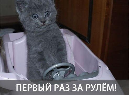 http://www.anekdotov-mnogo.ru/image-prikol/smeshnie_kartinki_141508314347.jpg