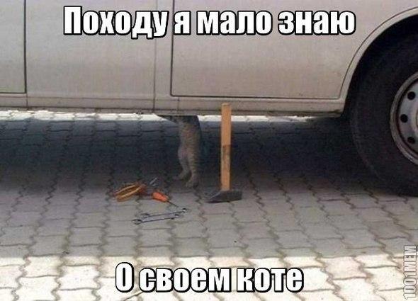 http://www.anekdotov-mnogo.ru/image-prikol/smeshnie_kartinki_141508314361.jpg