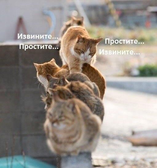 smeshnie_kartinki_14181345471.jpg