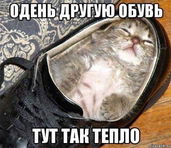 http://www.anekdotov-mnogo.ru/image-prikol/smeshnie_kartinki_141892719339.jpg
